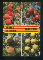 *Trini Fruits. Frutas De Lérida* Ed. Fisa. Escrita. - Agricultura
