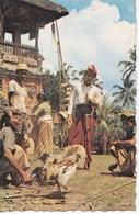 Indonesia - Adu Ayam - Combat De Coqs - Indonesia