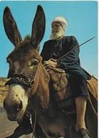 Israël - Arabe Sur Son âne - Israel