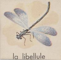 Chromos - Image - La Libellule - Chromos