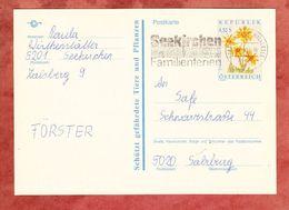 P 509 Arnika, MS Seekirchen, Nach Salzburg 1991 (68957) - Entiers Postaux