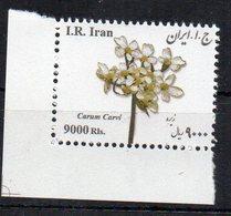 IRAN - 2017 - MEDICINAL FLOWERS - FLEURS MEDICINALES - FLEURS - FLOWERS - CARUM CARVI - - Iran