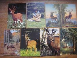 Lot De 25 Cartes Avec CERF Chevreuil Biche Daim / Herten Doe / Deer Doe - Autres