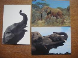 Lot De 3 Cartes Avec ELEPHANT - Olifant - Éléphants