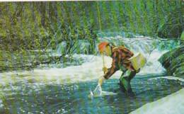 Fishing Fisherman Catching Trout - Fishing