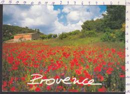 94173GF/ Photographe F. BERTHILLIER, *Provence* - Illustratori & Fotografie