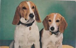 DOG POSTCARD - Dogs