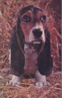 DOG POSTCARD. NOBODY LOVES ME - Dogs