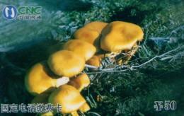 China Netcom Prepaid Cards, Mushroom,  Jilin Province,(1pcs) - Flowers