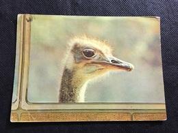 Avestruz - Birds