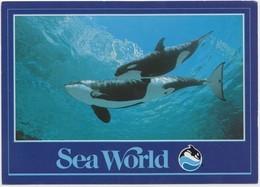Killer Whales In The Water, Sea World, Unused Postcard [21456] - Sonstige
