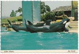Killer Whales, Sea World, Unused Postcard [21685] - Sonstige