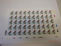 Buzin 3672 Steenuil 1/3/07 Plaatnummer 2 - 1985-.. Oiseaux (Buzin)