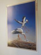 Buzin Postogram + Envelop  Zie Foto's RRRRR - 1985-.. Oiseaux (Buzin)