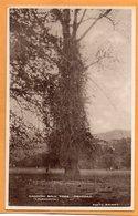 Trinidad BWI 1910 Postcard - Trinidad