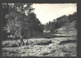 Houffalize - Environs D'Houffalize - L'Ourthe En Amont (vallée De Bistain) - Houffalize