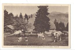 21394 - Chalet Pension Du Mont De Baulmes Vaches + Cachet - VD Vaud