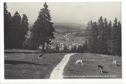 21396  - Mont De Baulmes Echappée Sur Ste-Croix Vaches + Cachet Châlet-Pension - VD Vaud