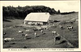 Cp Bellegarde Ain, Le Plateau De Retord, Chalet Et Paturage Du Charnay, Vaches - France