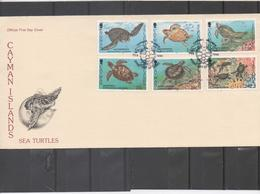 CAIMANES (Îles) -Faune - Tortues De Mer : Chelonia Mydas, Caretta Caretta, Dermochelys Coriacea...- 1er Jour - - Central America