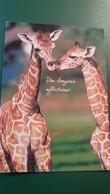 CPM GIRAFE HOUTLAND UN BONJOUR AFFECTUEUX PHOTO GLOBAL PICTURES - Girafes