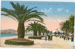 Cannes; Les Palmiers De La Place Du Casino - Non Voyagé. (ND) - Cannes
