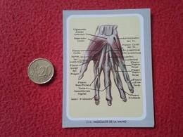 ANTIGUO CROMO OLD COLLECTIBLE CARD Nº 234 MÚSCULOS DE LA MANO MEDICINA MUSCLES OF THE HAND CUERPO HUMANO HUMAN BODY VER - Sin Clasificación