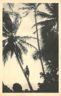 CAROLINES  CUEILLETTE DES NOIX DE COCO  JESUITES MISSIONNAIRES - LYON - Micronesia