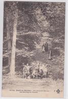Forêt De Meudon - Bruyères-de-Sèvres - Les Montagnes Russes - Meudon