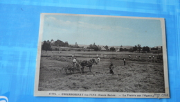 17774 - CHAMBORNAY Les PINS (Haute-Saône) - La Prairie Sur L'Ognon - France