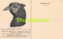 CPA CENTRALE DE WIELEWAAL BEGIJNENHOF TURNHOUT BRIEFKAART VOGEL OISEAU FAZANT - Turnhout