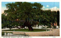 CHARLESTON OLD OAK TREE MAGNOLIA CEMETERY - Charleston