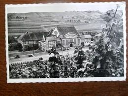 Postkaart  Cave Coopérative Des Vignerons De  WELLENSTEIN  S- Moselle  Luxemburg - Hotels & Restaurants