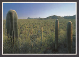 66486/ TUCSON, Saguaro National Monument - Tucson