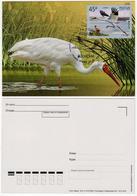 Russia 2019 MC Maxi Card EUROPA CEPT Siberian Crane Bird Birds Grus Leucogeranus Grue Blanche Oiseaux Oiseau - Grues Et Gruiformes