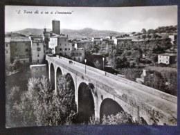 TOSCANA -GROSSETO -SANTA FIORA -F.G. LOTTO N°22 - Grosseto