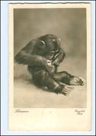Y11136/ Hamburg Tierpark Zoo Hagenbeck Schimpanse Affe Foto Ak 1938 - Germania