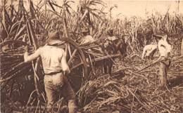Trinidad - Ethnic / 01 - Reaping Sugar Cane - Trinidad