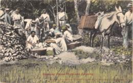 Trinidad - Ethnic / 03 - Breaking Cocoa Pods And Crooking - Trinidad