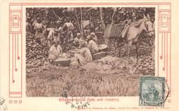 Trinidad - Ethnic / 07 - Breaking Cocoa Pods And Crooking - Trinidad