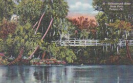 Florida Tampa Scene In Hillsborough River State Park 1943 Curtei