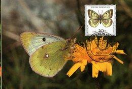 GERMANY,   Maximum Card,     Butterfly       /     ALLEMAGNE,   Carte Maximume,   Papillon   1991 - BERLIN O - Schmetterlinge