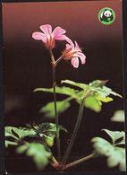 Flowers - Fleurs - Bloemen - Blumen - Fiori - Flores - Haisukurjenpolvi - Geranium Robertianum - WWF Panda Logo - Fleurs
