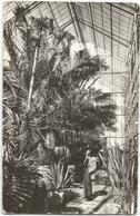 W647 Cluj - Gradina Botanica - Sera Plantelor Exotice / Viaggiata 1963 - Romania