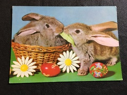 Conejos - Animales
