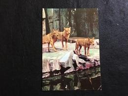 Lobos - Animals