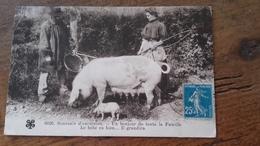 CPA Cochon - Souvenir D'excursion Un Bonheur De Toute La Famille - Schweine