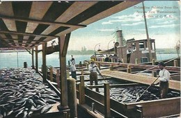 CPA Royaume-Uni * Unloading Salmon From The Seows. New Westminster * - Westminster Abbey