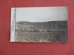 RPPC  Sheep   Ref 3139 - Animals