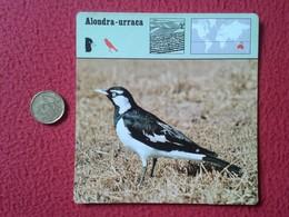 ESPAGNE SPAIN FICHA SHEET FICHE ALONDRA-URRACA MAGPIE PIE ELSTER BIRD ANIMALES ANIMAL FAUNA WILDLIFE VE FOTOS Y DESCRIPC - Animales